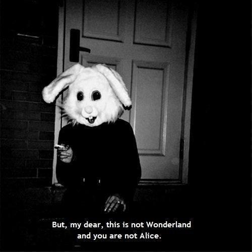 Bunny wonderland pic